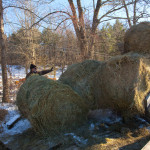 A weeks worth of hay delivered.