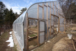 Our unheated solar-passive greenhouse.
